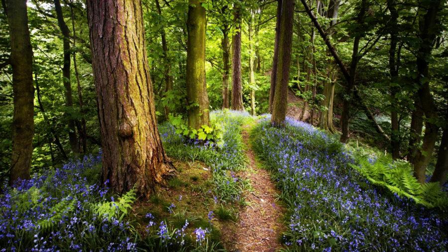 Il bosco che cura l'anima - Lorella Flego